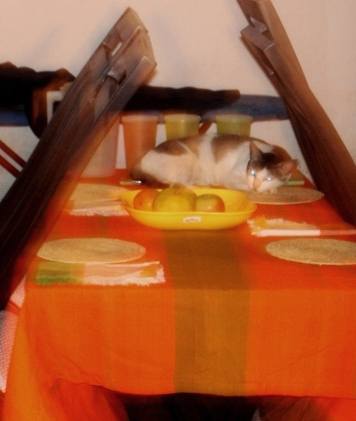 Effie on my dining table, She is not supposed to climb on the chairs, so decided the table was better
