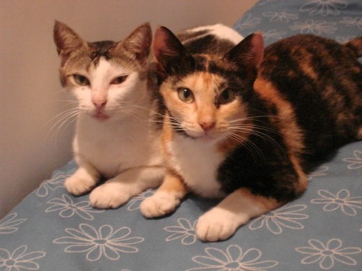 Effie and Ungie ( Effie's daughter)