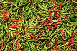 Peppers to fuel a chili-head or ease your pain with capsaicin.