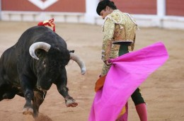 It is a serious affair and many Spaniards will learn that death is a normal thing from watching bullfights. The bull does not always lose.