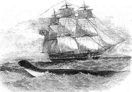 Daedalus sea monster