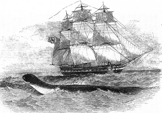Daedalus sea monster