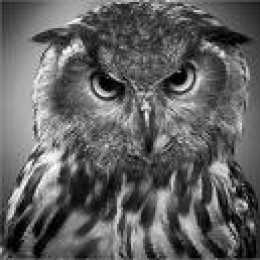Writing mentors? Wise owls of the writing world?