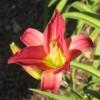 Anita Goodman profile image