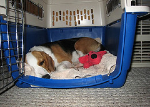 Comfy & Cozy in her Plastic Kennel ~ Flickr image by Cogdogblog