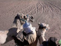 Arabian History