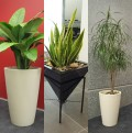 How to Keep Indoor Plants Alive and Well