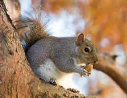 Squirrel Hunting 101: Tips and Tricks