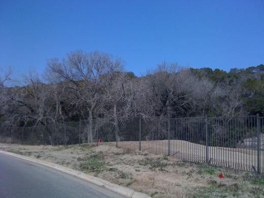 Cedar and Oak trees