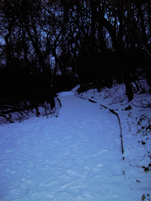one of the pathways to the lake in winter.