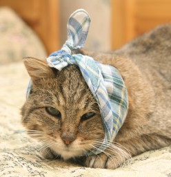 Common Cat Health Problems Including Kidney Disease, Heart Disease and Even Asthma!