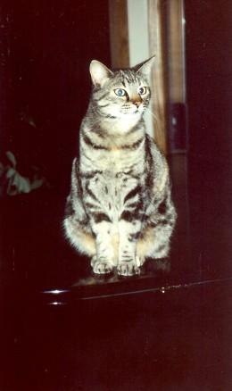 Karen's cat, Falina, sitting atop her baby grand piano.