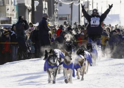 Iditarod Sled Dogs. of sled dogs. The Iditarod
