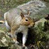 greysquirrel profile image