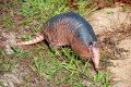 ARMADILLO by Morning, or My first encounter with Southern Wildlife.