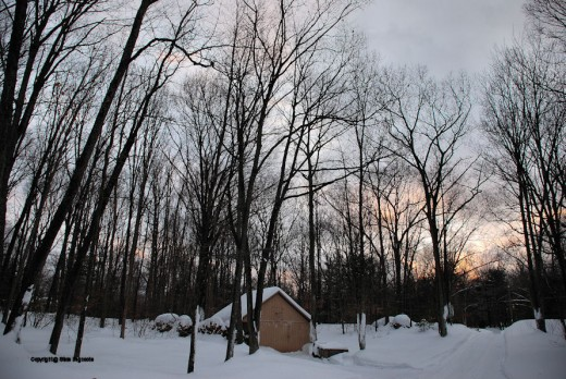 The evening sky offered a few hints of color, always welcome in January in Michigan.