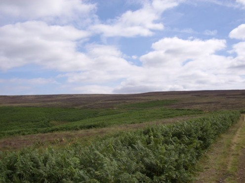 Yorkshire moors, a romantic setting for Wuthering Heights.