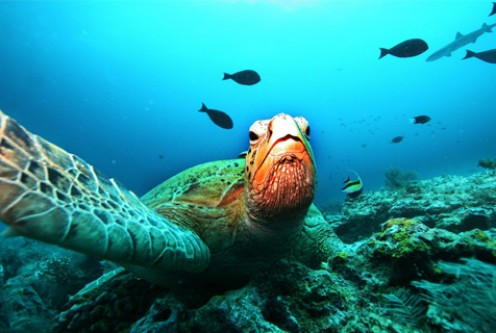 Globe's biodiversity threatened by excessive consumption and waste