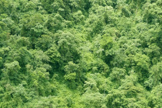 Most of Guyana is covered by dense rain forest.