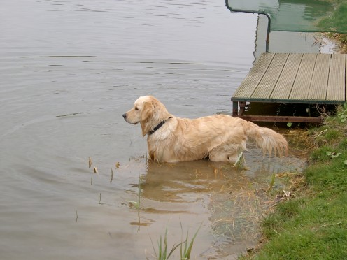 I'll go and get it says the retriever