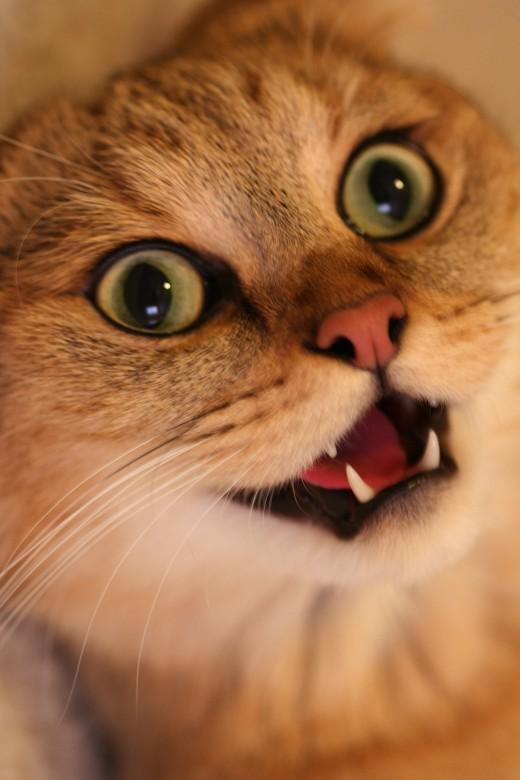 Catnip kitty!