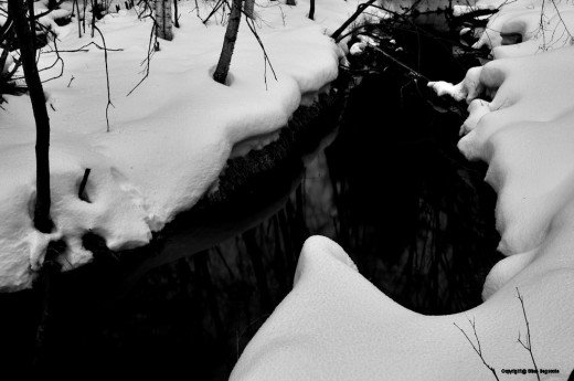 A bend in the creek is deep black in the twilight.