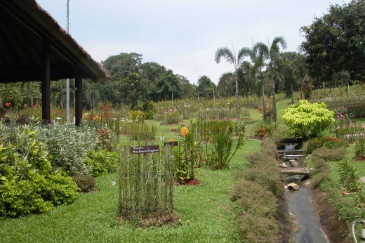 Mandai garden of orchids, 4 hectares of orchids plantation,