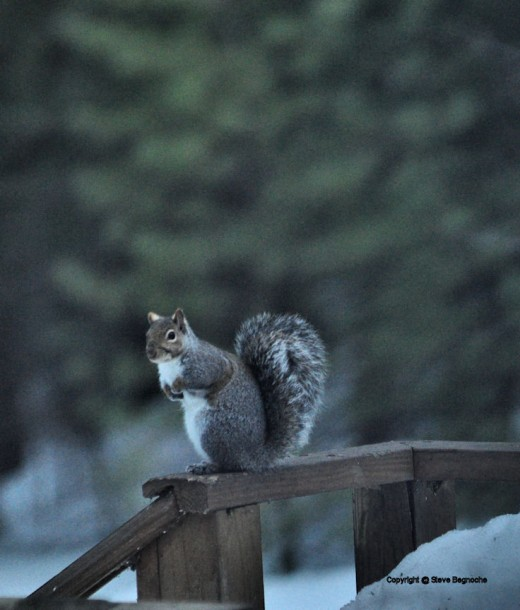 A squirrel was one of the few visitors while I sat in the blind this afternoon.