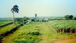 History Of Cuba Sugar Plantations | RM.