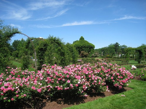 Elizabeth Park in Hartford, Connecticut