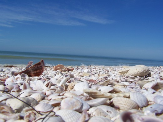 Shells on Honeymoon Island.