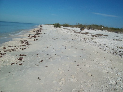 Honeymoon Island is one of Florida's beautiful state parks.  Caladesi Island, a short ferry-ride away, was named America's Best Beach in 2008.