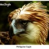 The Conservation of the World's Rarest Bird of Prey, the Philippine Eagle