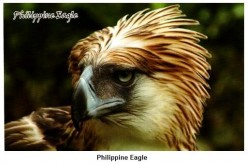 The Philippine Eagle Image was one of the Avatar I used here in HubPages