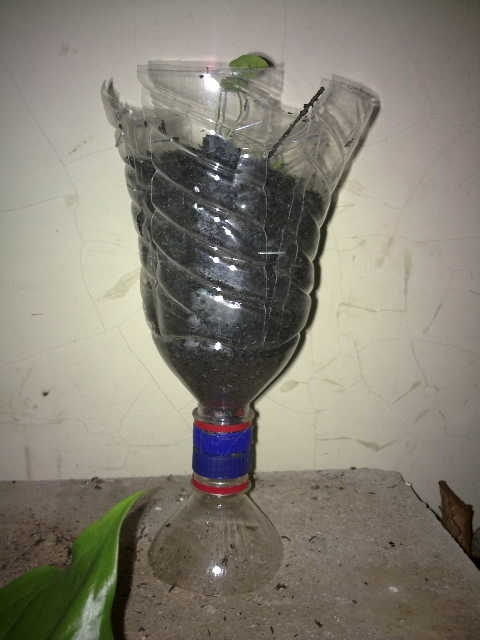 Fig 3: A flower pot made of upper part of a PET bottle.