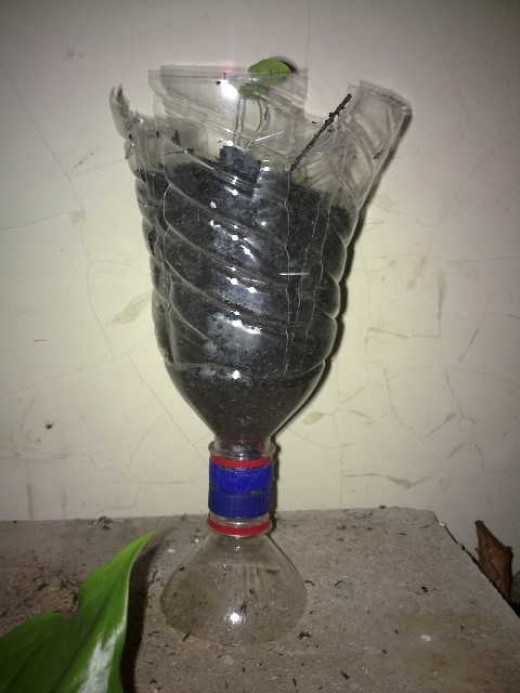 Fig 3: A flower pot made of upper part of a PET bottle.