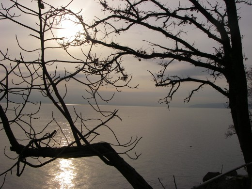 Early morning view of the sea through the trees