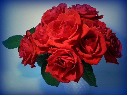 Red roses symbolize passion and love