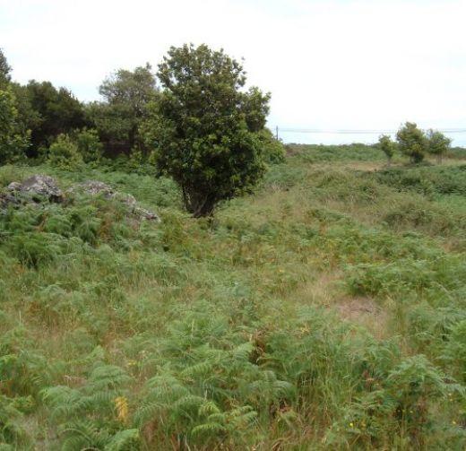 Greenery in Ruigomez