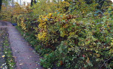 The beauty, hidden history and delicious treasures of the hedgerow