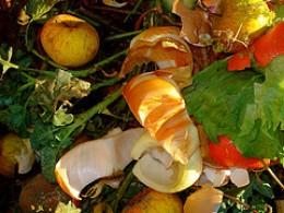 Still life on composter by net_efekt on Flickr, http://farm3.static.flickr.com/2313/2258122844_52a05cd84c_m.jpg