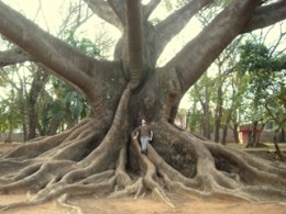 The Author, relaxing on one of the oldest trees alive today, Lal Bag gardens, Balgalore, India. Terreldor.net