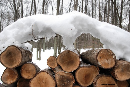As I removed cut wood to split and restack where it would be out of the weather, an arch of snow was left behind.