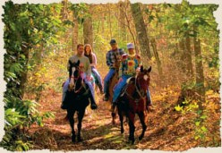 Places to Go Horseback Riding in NC