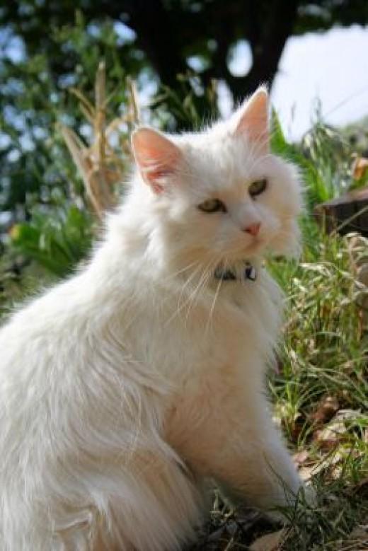 cats often get ear mites!
