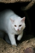 How to Train a Stray Cat to Use a Litter Box!