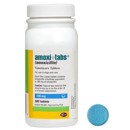 Amoxicillin in dogs