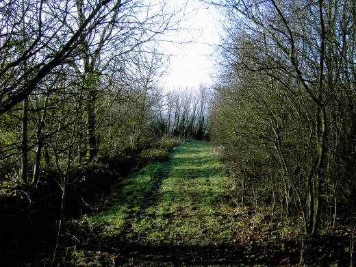 The short pathway between the ditch and the woodland