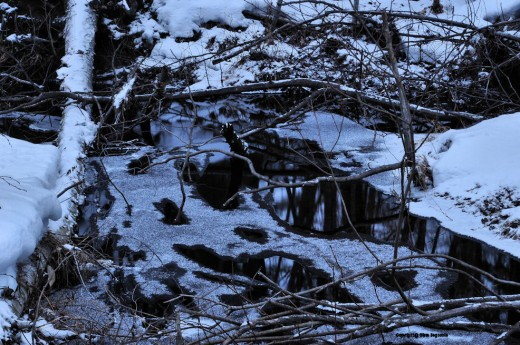 The tangle of brush creates more place from which ice can form and grow in the creek.