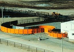 Temple Grandin's Cattle Chute